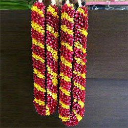 The varmala exchange ceremony is an important ritual in Indian marriage ceremony. Make this moment even more special with this gorgeous varmala adorned with red and yellow roses.