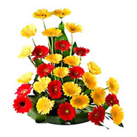 This flower basket consists of 24 bright and beautiful Red and Yellow Gerberas.  Bring a bright smile on the face of your loved ones