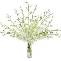 Send an arrangement of 10 White Orchid in a Glass Vase