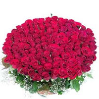 Send 300 long-stemmed roses and make someone swoon. Our fancy long-stemmed roses are paired with small green leaves for an updated look and feel in a lavish bouquet, Flowers to Bangalore