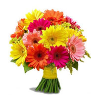 perfect blossoms arrive in a modern thats lined with glossy green leaves. Its like giving a lots of joy! Bunch with 20 Mixed Gerberas with Green & Fillers