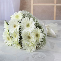 Bunch of 12 White Gerberas With Tissue Paper wrapping & Matching Ribbon Bow Tied, Flowers to Chennai