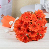 10 Orange Gerberas, Cellophane Packing with ribbon bow, Flowers to Chennai