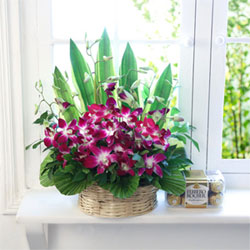 Basket of 10 Purple Orchids with 16pc Ferrero Rocher box, Flowers to Bangalore