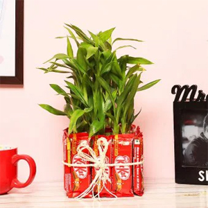 Attractive Bamboo Plant