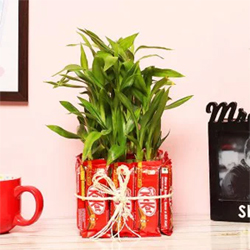 Attractive 2 Layer Bamboo Plant