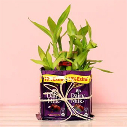 Captivating 2 Layer Bamboo Plant