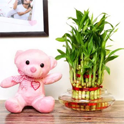 2 Layer Lucky Bamboo Exuberance + 6'' Pink Teddy bear , Flowers to Bangalore