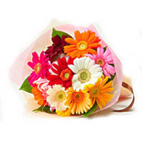 Delight your loved ones in India by sending this bunch of 12 Multicolour Gerberas.