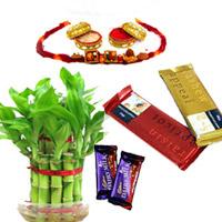 Lucky Bamboo With Cake,2layer Lucky bamboo with one Rakhi 2 Cadbury Temptation Chocolate  2 dairy milk chocolates