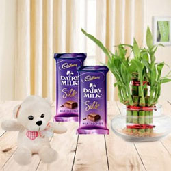 Two Dairy Milk Silk Chocolates Each one 65gms+One small Teddy Bear+Lucky Bamboo Plant - 2 Layer
