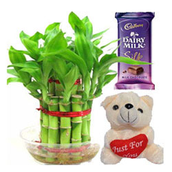 2 Layer Lucky, Bambo small silk chocolate & small teddy bear