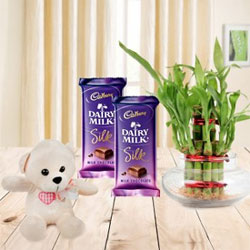 Two Dairy Milk Silk Chocolates Each one 65gms +One small Teddy Bear 6 inch + Lucky Bamboo Plant - 2 Layer